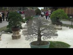 CHINA BONSAI  EXHIBITION