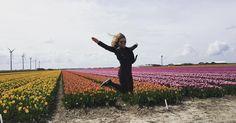 Blütenpracht, die beflügelt - in Fluwel's Tulpenland. Thanks for sharing, marishe4ka!