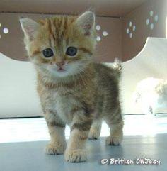 chaton trop mignon