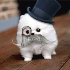 Dr. Watson I presume...this is probably the  cutest dog pic EVER!