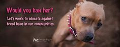 A reasonable person would not ban her.  We can't save the past victims of BSL but we can do something now to stop this.