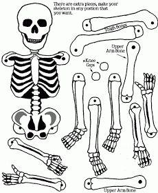trekpop skelet halloween | biologie | pinterest | halloween, Skeleton