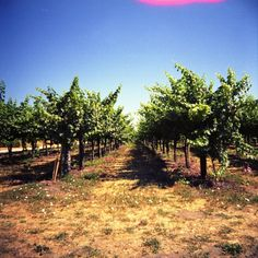 Wine + Napa Valley + Robert Louis Stevenson = Silverado Squatters