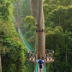 Danum Valley, Sabah, Malaysia.