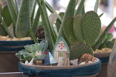 #minigarten #miniatur #klein #zimmerpflanzen #gruenpflanzen #kaktus #sukkulenten #trocken #sonnig #sand #steine #deko #schiff #muscheln #blumenwelt #erlebnisgaertnerei #hoednerhof #ebbs #kufstein #mils #hall #tirol #gaertnerei  #groeßtegaertnereitirol #ausflugsziel #erleben #wohlfuehlort #cafebistro #eigenproduktion #pflanzenwelt #dekowelt #veranstaltungen #kinderveranstaltungen #blumenliebe #inspiration #dekoliebe