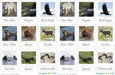 Montessori North American Animals 3-Part Cards