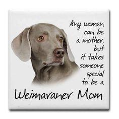 My babies.love them to the moon! Weimaraner Puppies, Dogs And Puppies, Doggies, I Love Dogs, Puppy Love, My Best Friend, Best Friends, Animals And Pets, Cute Animals