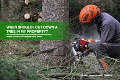Cutting down trees on your property in Canada is not very simple as there are tree laws to honour & follow. If you think that your or a neighbour's property needs to be cut down, you need to abide by the laws of your city. It also helps to call for #TreeServices for safe removal.