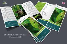 Flexible Trifold Brochure / 3 Colors by Imagearea on Creative Market