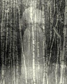 Linda Plaisted.  Fine art photography.   Standards | Flickr - Photo Sharing!