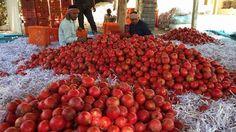 Pomegranate www.farmfirst.in