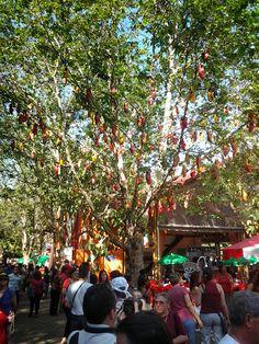 Árvore dos Tamancos.