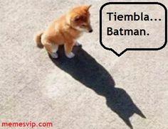 Meme Batman Dog #chistes #meme #memes #momos #español #memesenespañol #memesvip #memesvipcom #chistecorto #humor #2017trends #2017 #madrid #barcelona #california #losangeles #mexico #argentina #chicago #sevilla #valencia #newyork #venezuela #colombia  #trending #usa #dog #animals #batman #sanfrancisco