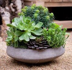 Arreglos con Suculentas | Cuidar de tus plantas es facilisimo.com