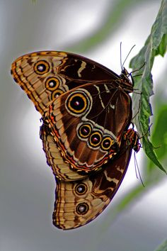 """But these are flowers that fly and all but sing: And now from having ridden out desire They lie closed over in the wind and cling Where wheels have freshly sliced the April mire. ~Robert Frost, """"Blue-Butterfly Day"""""""