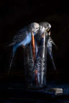 birds by Javier Senosiain Jimeno on 500px