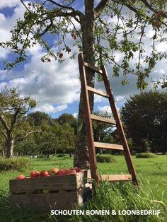 Appeloogst van een oude hoogstam appelboom uit het assortiment van Schouten Bomen & Loonbedrijf Ladder Decor, Zero, Cottage, Home Decor, Decoration Home, Room Decor, Cottages, Cabin, Home Interior Design