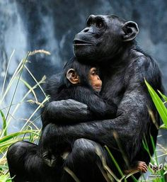 is amazing...mother's love is really amazing!