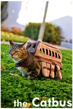 This is super adorable!! A Catbus outfit for a cat! Found at jlist.com    130113 Update: Britex had this blog featured on their newsletter. Here's the link to the artist's blog: https://sweetipomoea.wordpress.com/2012/10/25/my-cat-is-a-bus/