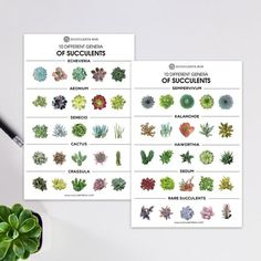 If you just started collecting succulents, you may find it difficult to identify them, since most of them are alike. Here are some of the most widely known succulents with the rich textures that you can use to identify your succulent quickly. Succulent Gifts, Succulent Care, Rare Succulents, Planting Succulents, Identifying Succulents, Succulent Gardening, Succulent Plants, Different Types Of Succulents, Succulent Species