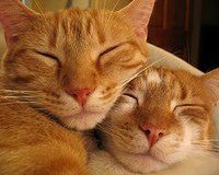Orange Tabby cats...I love them!