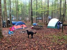 Camping with Dogs 101