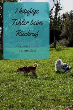 7 häufige Fehler beim Rückruf – und wie du sie vermeidest In this article you will learn what mistakes you can make when recalling your dog and how to avoid them. Human Food For Dogs, Pet Dogs, Dog Cat, Doggies, Havanese Dogs, Mini Goldendoodle, Food Dog, Guide Dog, Call Backs