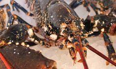 The ultimate crab and lobster trap - Stu n Dumplings