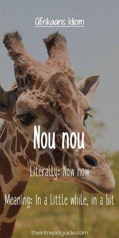 African Jokes, Afrikaans Language, Afrikaanse Quotes, Biker Quotes, In A Little While, Idioms, Cute Quotes, Cool Words, South Africa