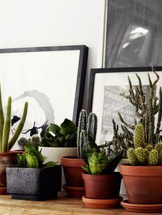 Find images and videos about green, plants and cactus on We Heart It - the app to get lost in what you love. Cactus Plante, Pot Plante, Plantas Indoor, Cactus E Suculentas, Plants Are Friends, Cacti And Succulents, Green Plants, Houseplants, Indoor Plants