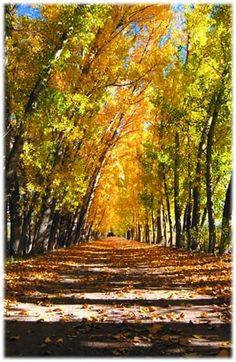 #otoño #sanrafael #belleza #naturaleza #mendoza #sanrafaelgroup www.sanrafaelgroup.com.ar Mendoza, San Rafael, Country Roads, Places To Visit, Naturaleza, Argentina, Scenery, Beauty
