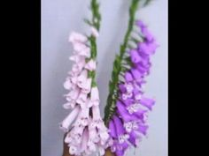 Paper Flower - Foxgloves / Digitalis (Flower # 50) - YouTube