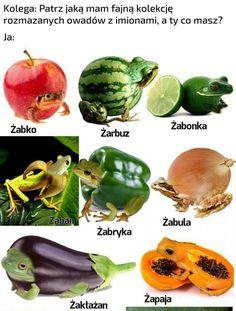 Cantaloupe, Wattpad, Photoshop, Humor, Fruit, Vegetables, Funny, Pug, Humour