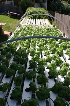 Ideas for lettuce production