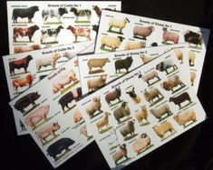 Six Post Cards, three sheep, two cattle and one pig, all different breeds. Plain backs. Chicken Pictures, Bird Pictures, Raising Farm Animals, Sheep Breeds, Beautiful Chickens, Chicken Breeds, Etsy Uk, Rind, Livestock
