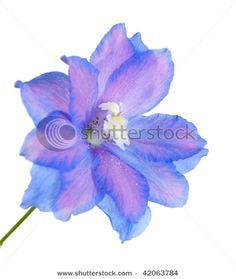 July Birth Flower Larkspur Tattoo | Larkspur Tattoo