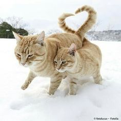 How loving .. kitty nudging mum, & well-timed 'heart-tail'.
