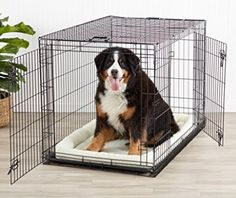 In this in-depth review of the AmazonBasics folding double door dog crate we take a look at some of the more pertinent issues and see how sturdy it really is