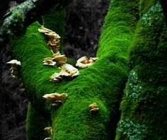 mossy trunk with mushrooms, via Flickr.