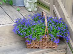Blue Lobelia is a wonderful annual to add to your garden this year. It comes in VIBRANT shades with loads of blooms and grows in full sun to part shade. Container Plants, Container Gardening, Gardening Tips, Container Flowers, Shade Flowers, Shade Trees, Blue Flowers, Summer Garden, Lawn And Garden