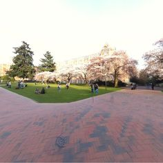 360 of the UW Quad where the Cherry Blossoms have bloomed!