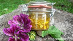 Eingelegte Kapern selbst herstellen? Aus den unreifen Samen der heimischen Malve kannst du eine köstliche Alternative ganz einfach selber machen.