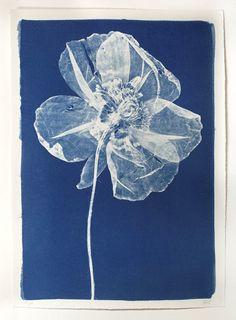 Large Cyanotype Poppy by Henrietta Molinaro-wilson-stephens--jones-large-cyanotype-poppy-by-henrietta-molinaro-632_1.jpg