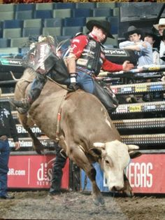 Guilherme Marchi Bull Riding, Horse Riding, Professional Bull Riders, Weapon Storage, Rodeo Cowboys, Rodeo Queen, Rodeo Life, Cowboy And Cowgirl, Deer Hunting