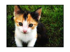 Pet Portraits - fionamphotography