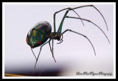 Metallic Silver Green Spider II