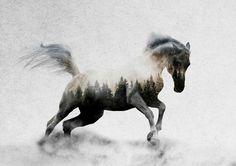 Hest I Leinwanddrucke von Andreas Lie - Pferd - Pferde Pretty Horses, Horse Love, Beautiful Horses, Horse Drawings, Animal Drawings, Logo Animal, Berg Tattoo, Running Horses, Animal Tattoos