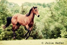 Horse Photography Running Horse Horse Art by jrefer on Etsy