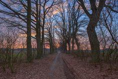 Metal Maik posted a photo:  Sonnenuntergang über dem Feldlielienpfad Govelin, zwischen Harlingen und Govelin (Landkreis Lüchow - Dannenberg, Niedersachsen). Aufgenommen am 13. März 2017.