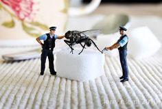 Sugarfly
